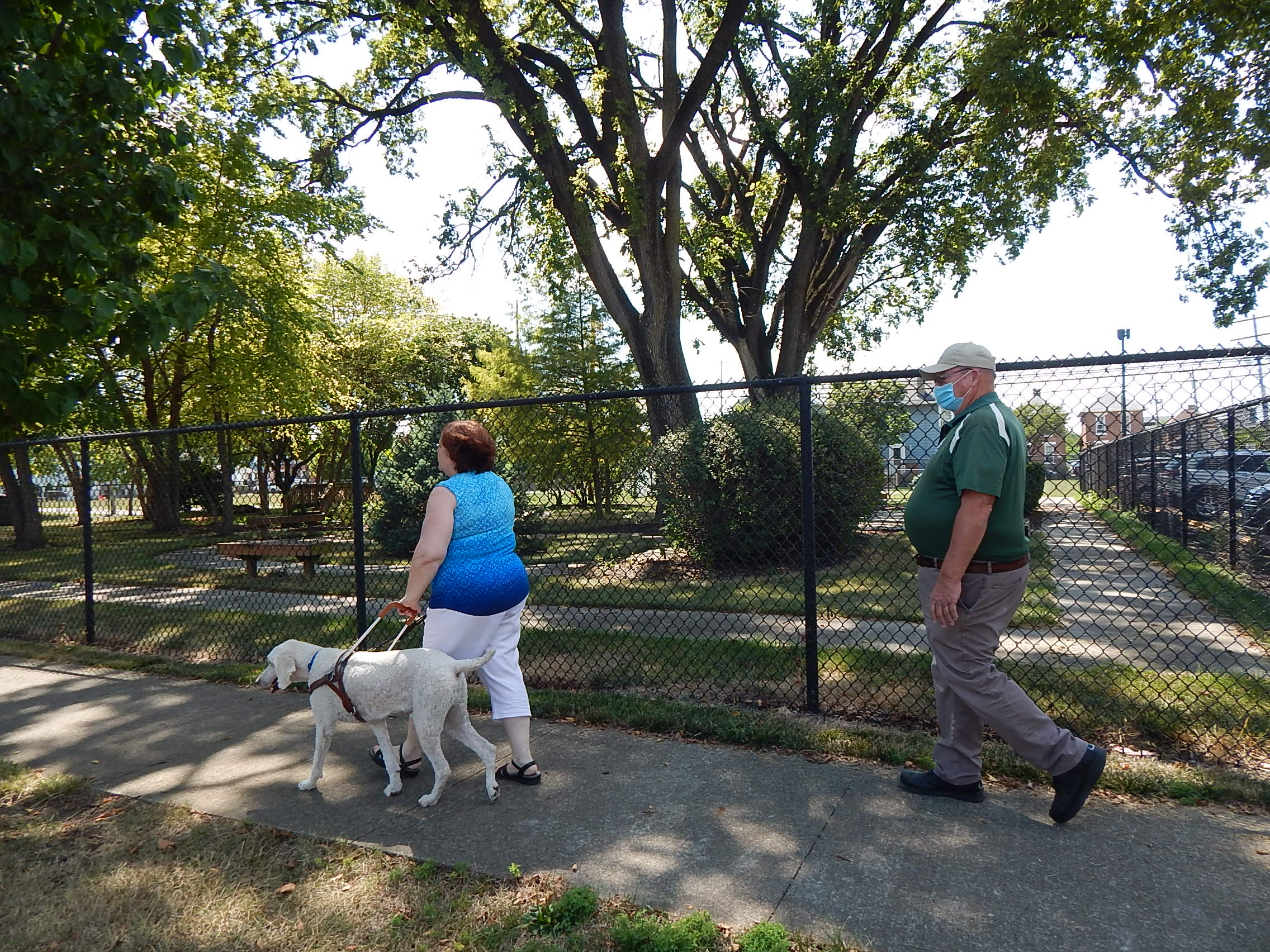 White Standard Poodle guiding student in harness with Pilot Dog Trainer following
