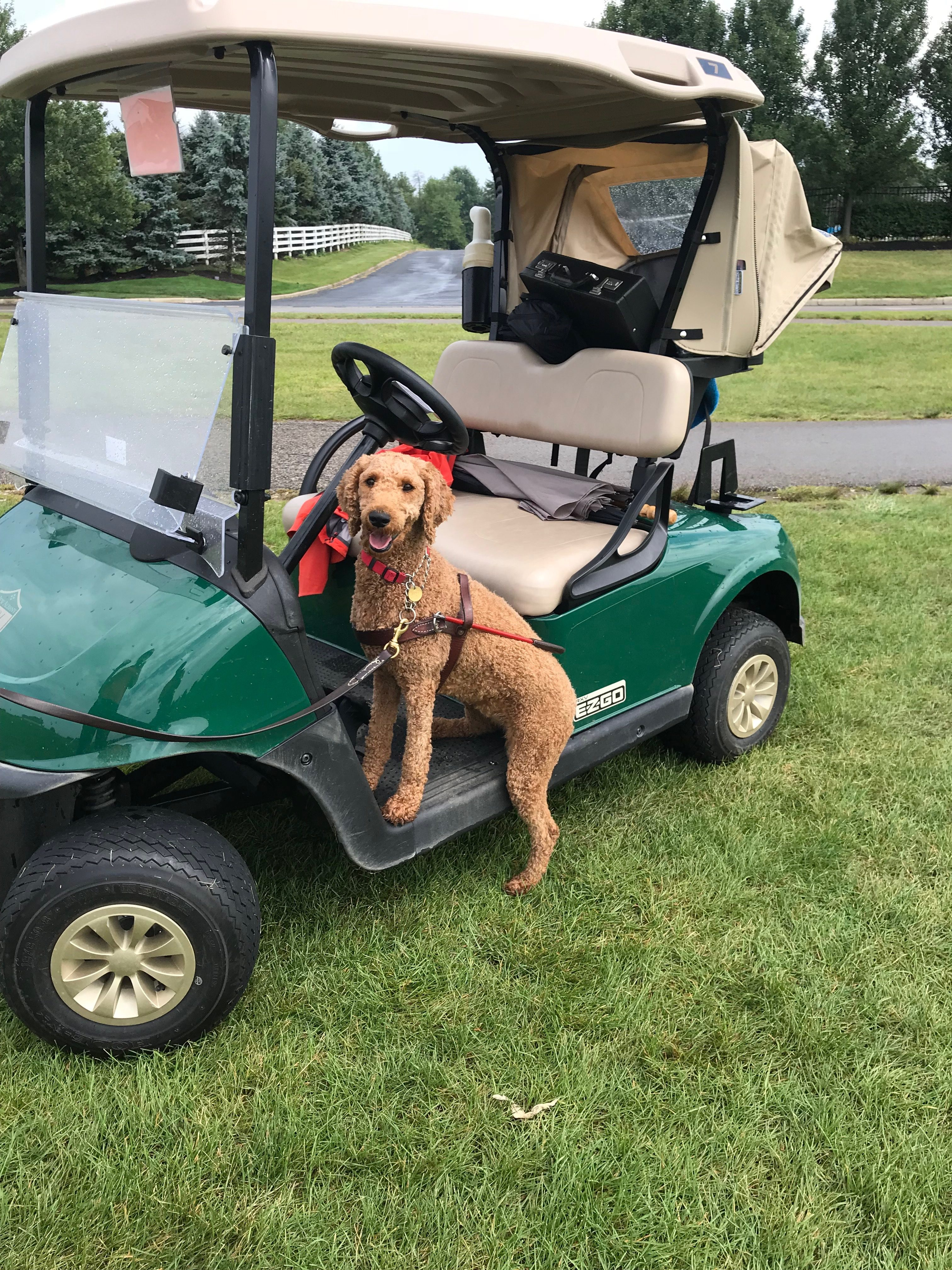 2019 Pilot Dogs Golf Outing